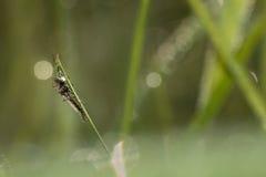 moskito Lizenzfreie Stockfotografie