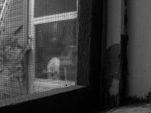 Moskito-Blockade Stockfotografie
