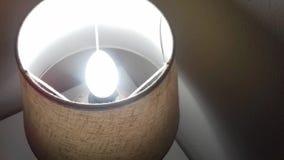 Moskitofliegen in Richtung zur Glühlampe stock video