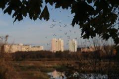 Moskitos fliegen zur Sonnenuntergangzeit im Spätherbst Stockbild