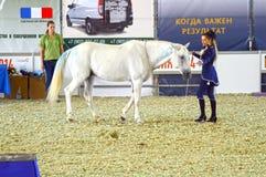 Moskou die Hall International Equestrian Exhibition During bevrijden de show Vrouwenjockey in een donkerblauwe kleding en een wit Royalty-vrije Stock Foto