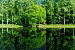 Moskou/Rusland - Bezinning van groene bomen op vijver, Kalme de lentemening van de vijverkust stock afbeeldingen