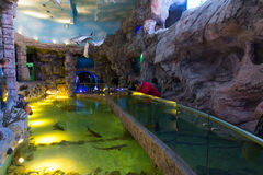 Moskou, Rusland - December 10 2016 Binnenlandse oceanarium van de Krokusstad in Krasnogorsk Stock Foto