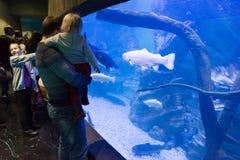 Moskou, Rusland - December 10 2016 Mensen rond aquarium in oceanarium van de Krokusstad in Krasnogorsk royalty-vrije stock afbeeldingen