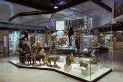 Moskou, Rusland - Februari 24, 2016: Staat Darwin Museum royalty-vrije stock afbeeldingen