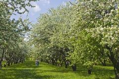 Moskva Kolomenskoye trädgårdar Fotografering för Bildbyråer