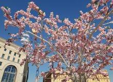 Moskva Ryssland - April 14 2018 konstgjort blomningträd på den Lubyanskaya fyrkanten under festivalpåskgåvan Royaltyfria Foton