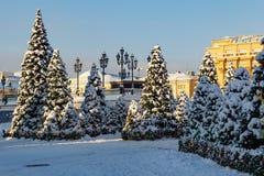 Moskva Ryssland - Februari 01, 2018: Snö-täckte julträd på den Manezhnaya fyrkanten moscow vinter Royaltyfri Bild