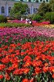 Moskva Ryssland - Maj 12 2018 stor blomsterrabatt med tulpan i Alexander Garden Arkivfoto