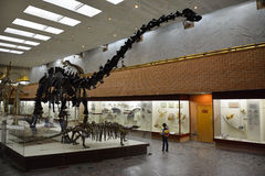 MOSKWA, ROSJA: 06 09 2015 - gady w paleontological muzeum Fotografia Royalty Free
