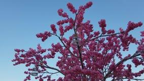 Moskwa Rosja, Kwiecień, - 14 2018 sztuczny kwiatonośny drzewo na Lubyanskaya kwadracie podczas festiwal wielkanocy prezenta zdjęcie wideo