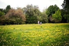 MOSKWA ROSJA, MAJ, - 15, 2019: Kobieta z dzieckiem na polu z żółtymi dandelions przy słonecznym dniem, wiosna czas obraz royalty free