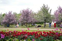 MOSKWA ROSJA, MAJ, - 15, 2019: Ludzie w Kolomna parku z kwitnącym bzem przy wiosna czasem fotografia royalty free