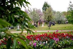 MOSKWA ROSJA, MAJ, - 15, 2019: Ludzie w Kolomna parku z kwitn?cym bzem przy wiosna czasem zdjęcia stock