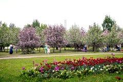 MOSKWA ROSJA, MAJ, - 15, 2019: Ludzie w Kolomna parku z kwitn?cym bzem przy wiosna czasem obraz royalty free