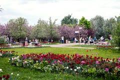 MOSKWA ROSJA, MAJ, - 15, 2019: Ludzie w Kolomna parku z kwitn?cym bzem przy wiosna czasem zdjęcie royalty free