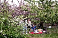 MOSKWA ROSJA, MAJ, - 15, 2019: Ludzie w Kolomna parku z kwitn?cym bzem przy wiosna czasem obraz stock