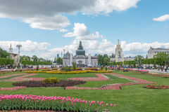 MOSKWA ROSJA, Maj, - 27, 2017: Tulipany na VDNKh Zdjęcie Stock