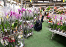 MOSKWA ROSJA, MARZEC 04 2015, -: Orchidee w OBI sklepie w Moskwa Rosja OBI jest Niemieckim siecią sklepów prowiantowym i budynek  Zdjęcie Stock