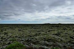 Moslandschap met stenen in dikke lagen van mos, zeer speciaal landschap in dramatisch licht worden behandeld, IJsland dat royalty-vrije stock afbeelding