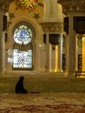Moslimvrouw die in moskee bidden stock afbeeldingen