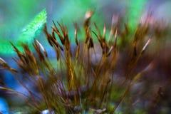 Mosmacro met groene en blauwe bokeh stock foto