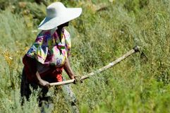 Mosotho Lady at work. Mosotho lady hoeing her fields near Mohkotlong Royalty Free Stock Photo