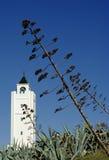 Mosquée en Tunisie Photos libres de droits