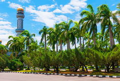 Mosque and alley with  palms. Part of mosque and alley with palm trees Royalty Free Stock Image