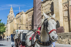 Mosque Cathedral of Cordoba in Andalusia, Spain Royalty Free Stock Image