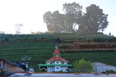 The mosque in front of terasering or terracing. Terracing is a technique of planting in the highlands. like in this Dieng plateau royalty free stock photos