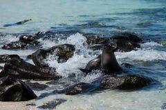Mosquera wyspa, Galapagos, Ekwador zdjęcie stock