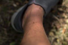 mosquito Fotografia de Stock Royalty Free