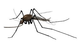 Mosquito. 3d render of mosquito insect Stock Image
