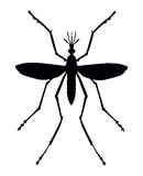 Mosquito Royalty Free Stock Image