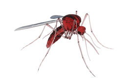 Mosquito. 3d render of a mosquito isolated on white background Royalty Free Stock Photo