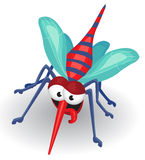 Mosquito royalty free stock photos