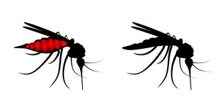 Mosquito stock de ilustración