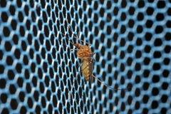 Mosquito Imagem de Stock Royalty Free
