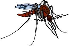 Mosquito Foto de archivo