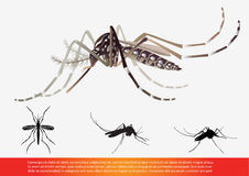 mosquito Imagem de Stock