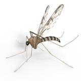 Mosquito aislado de Digitaces Imágenes de archivo libres de regalías