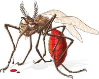 Mosquito. Big Evil Mosquito engorged blood royalty free illustration