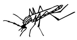 Mosquito Stock Image