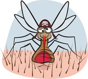 Mosquito - blood sucking Royalty Free Stock Photo