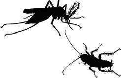 Mosquito and cockroach Royalty Free Stock Image