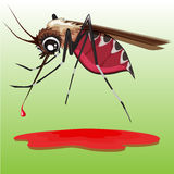 Mosquito. Stock Photography