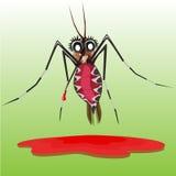 Mosquito. Royalty Free Stock Photos