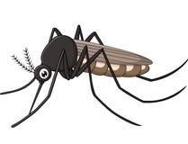 Mosquito de la historieta en el fondo blanco Fotografía de archivo