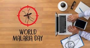 Mosquito de MALARIA que chupa el aler del virus de Zika del día de la malaria del mundo de la sangre Foto de archivo